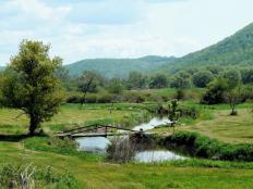 creek_through_meadow_small
