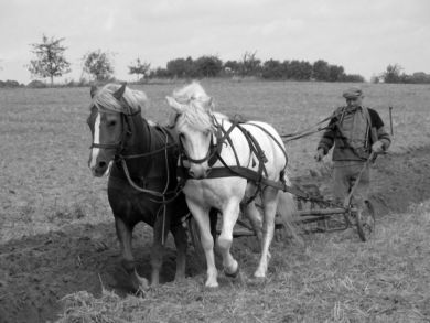 Horse_plowing_wiki bw